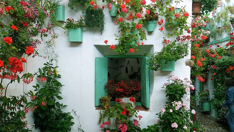GUIDED TOUR OF THE LUSH PATIOS OF CORDOBA.