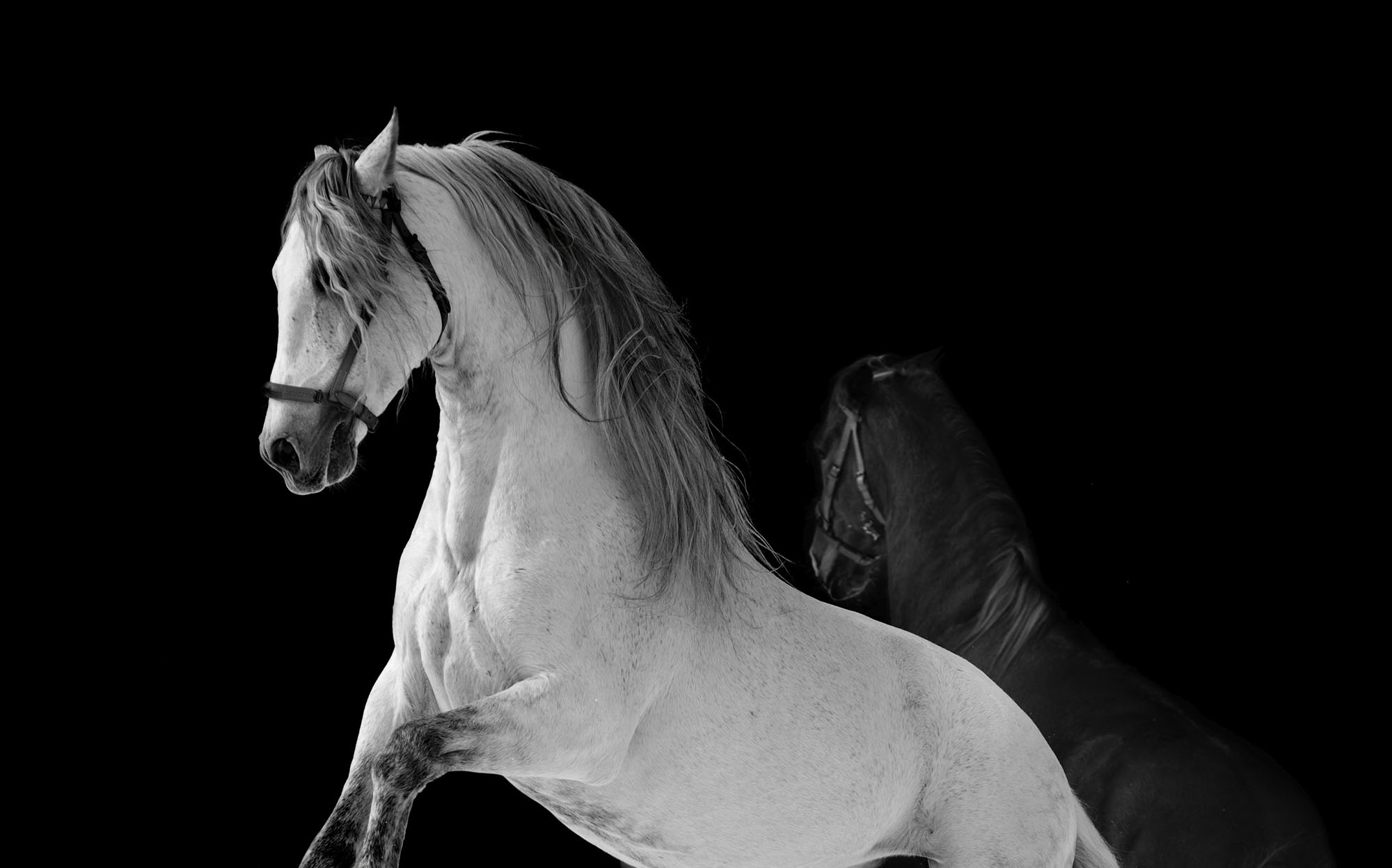 THE WONDERFUL ANDALUSIAN HORSE